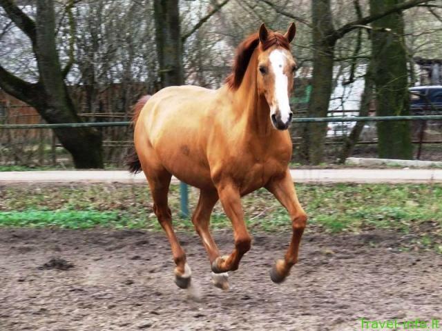 Jodinėjimas – Kauno žirgynas